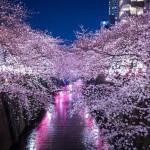 【東京の桜の名所】カップル向けランキング!ベスト3!