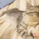 【睡眠の質を上げる方法3カ条】グッズやおすすめアプリもチェック!