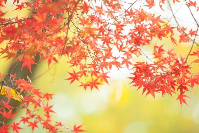 【東京都内のおすすめ紅葉パワースポット】金運と恋愛運をあげる!