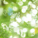 【まんのう公園イルミネーション2016】点灯時間と混雑回避方法!