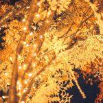 【マザー牧場イルミネーション2016】混雑状況と点灯時間をチェック!